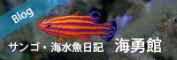 ブログ-海勇館